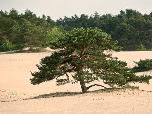 Boom op het zand