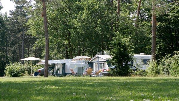 Caravans in het bos