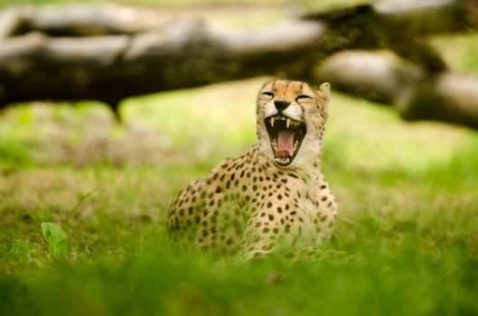 Safaripark Chita