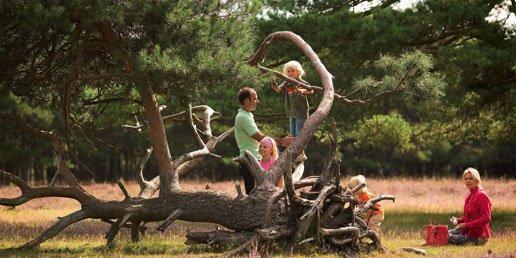 Klimmen op een boomstam