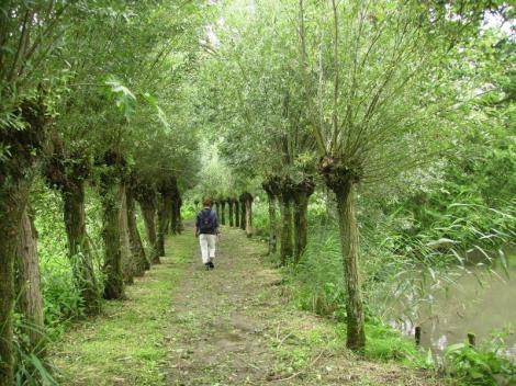 De Biesbosch (Drimmelen)